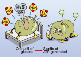 2. Anaerobic respiration